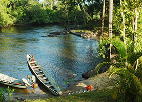 Suriname, Rondreis: 8 Dagen Impressions of Suriname
