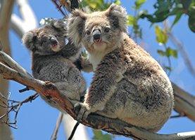 Australië – Sydney One Day Tours