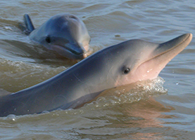 Suriname, One Day Tour: Spotting Dolphins at Sunset