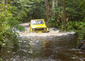 Suriname Meerdaagse Tour: 2 Dagen Cordon Savanne Wandelpad